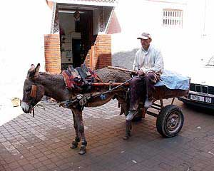 De ezel als transportmiddel in Marrakech